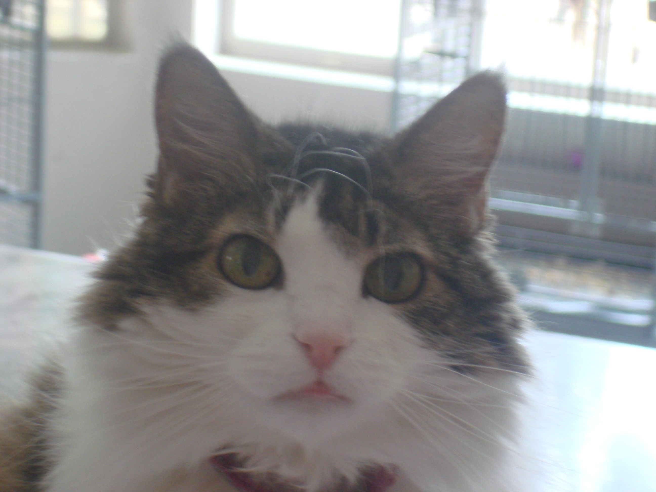 Mattie is such a sweet cat, she was a rescue from the