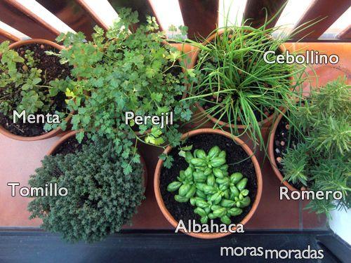 Hierbas arom ticas huerta y jardineria pinterest for Jardinera plantas aromaticas