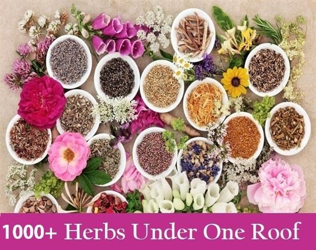 Buy Ayurvedic Herbs And Jadi Buti Online Indianjadiboo In 2021 Ayurvedic Herbs Healing Herbs Herbs