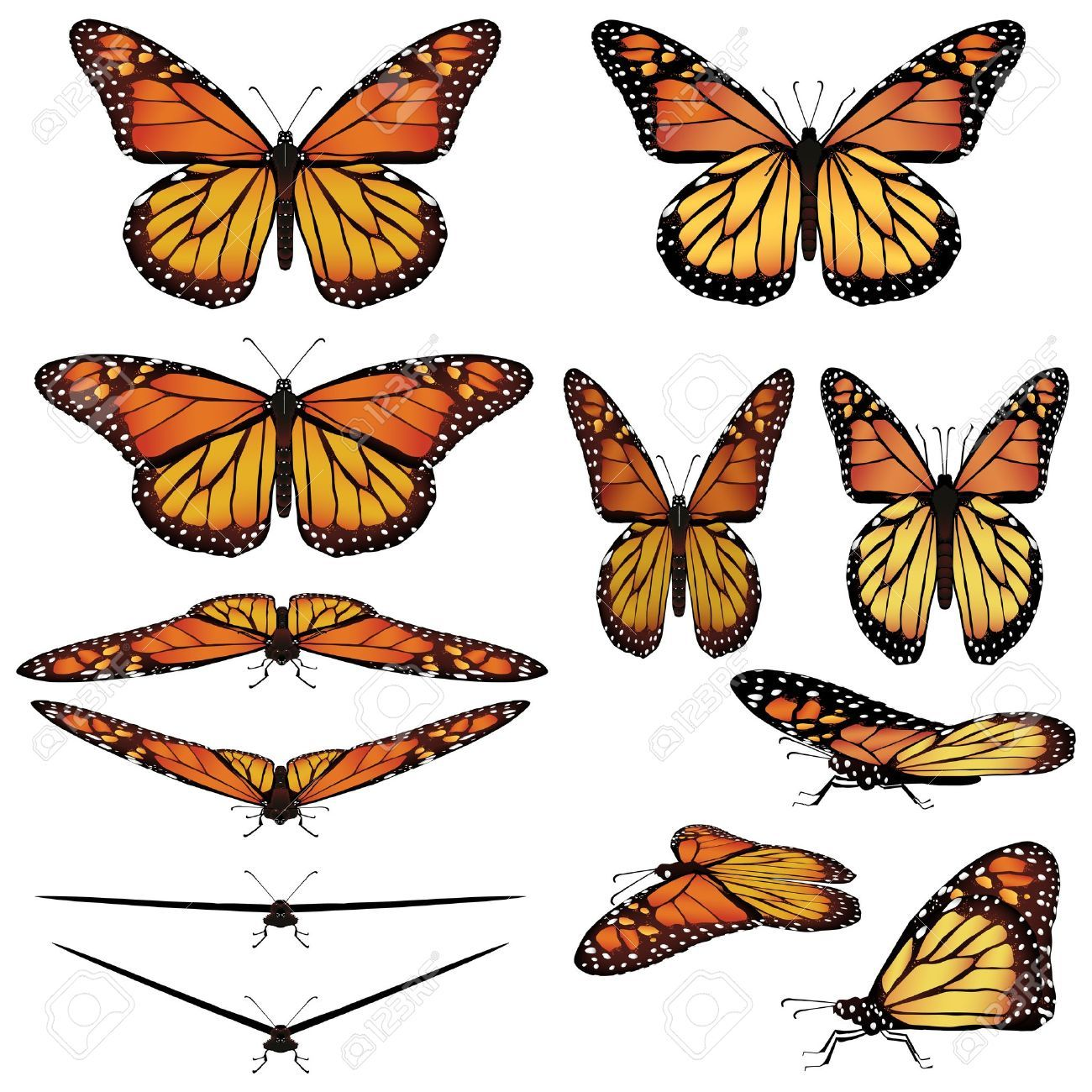 hight resolution of monarch butterfly google search