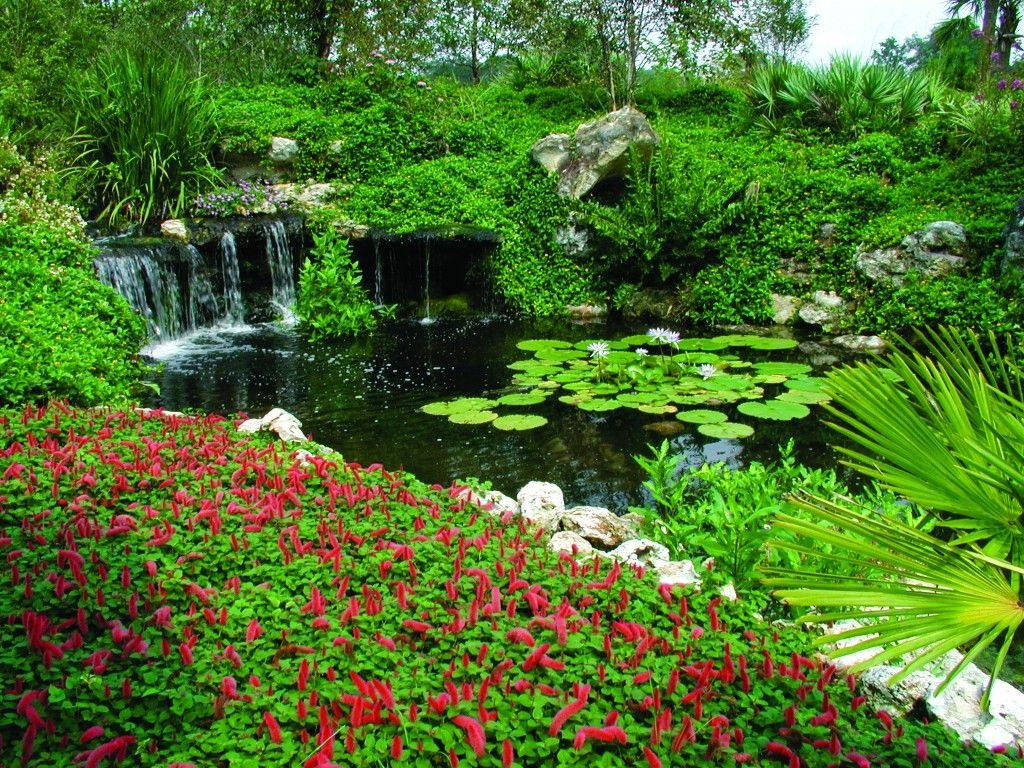 Home Gardens | Beautiful Garden | Water Garden | Wonderful View | Hd  Wallpaper .