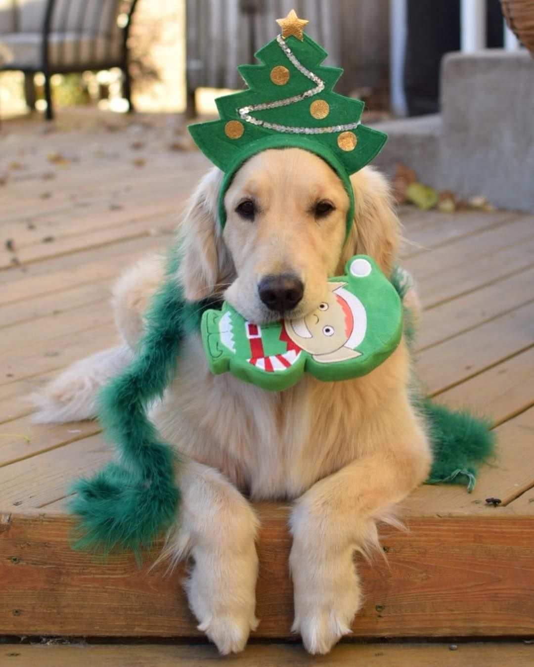 The 25+ best Christmas pets ideas on Pinterest   Dog ...
