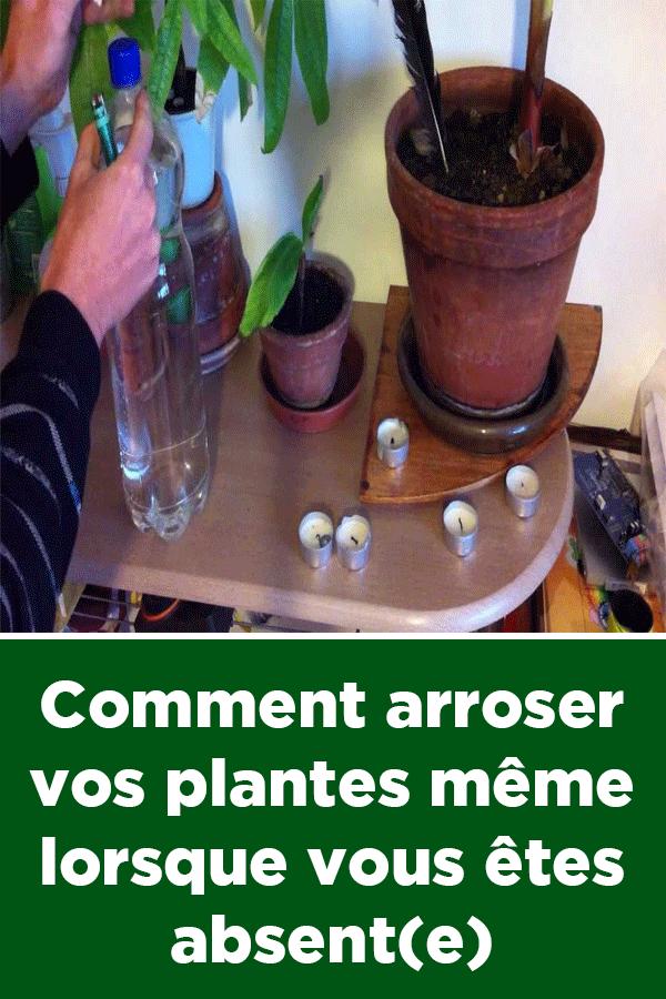 Comment Arroser Vos Plantes Meme Lorsque Vous Etes Absent E