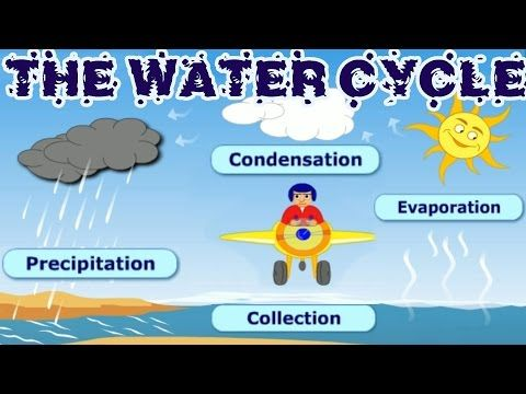 The Water Cycle Collection Condensation Precipitation Evaporation Learning Videos For Children