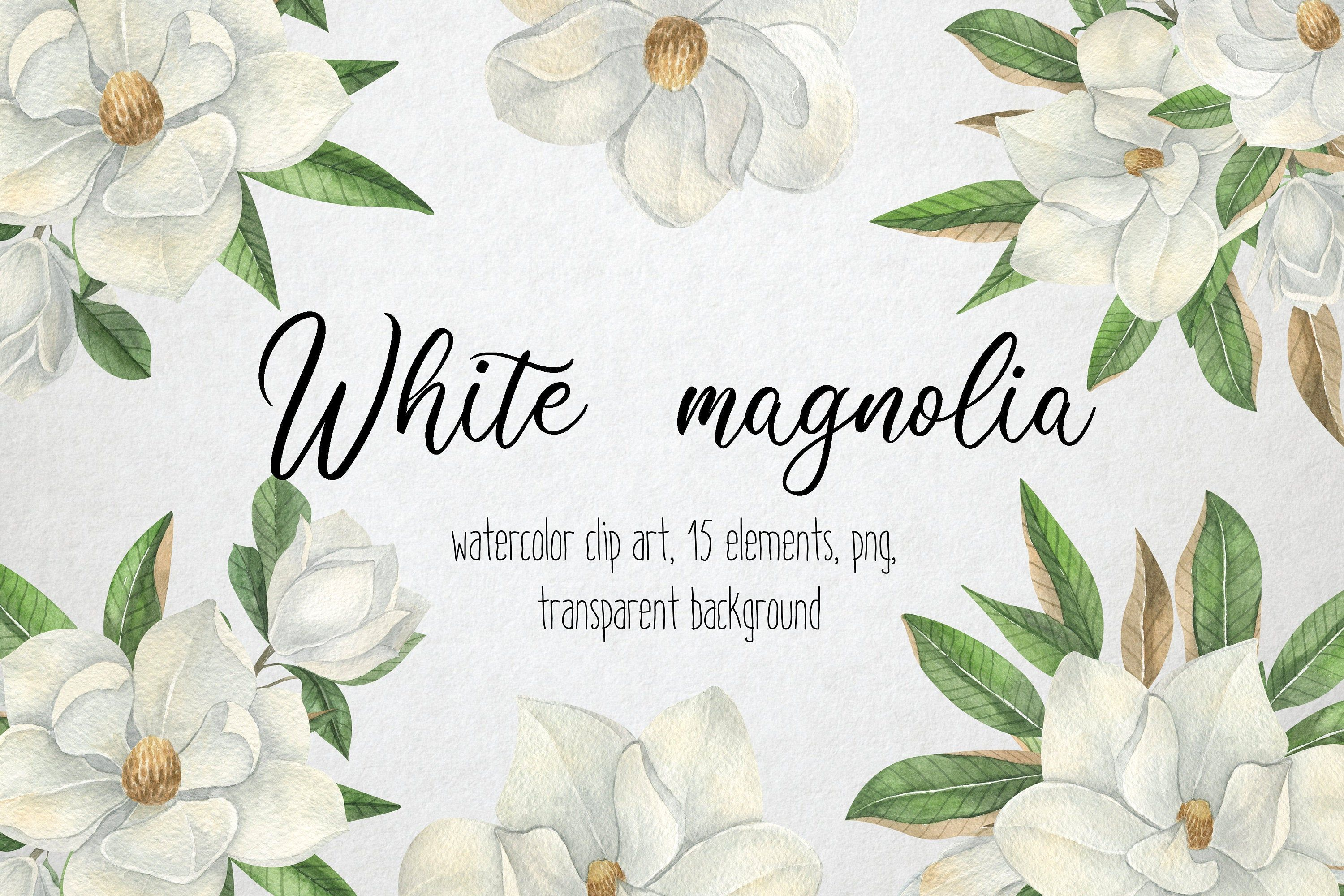 White Magnolia Flowers Clip Art Watercolor Summer Floral Clip Etsy In 2020 Flower Clipart Clip Art White Magnolia
