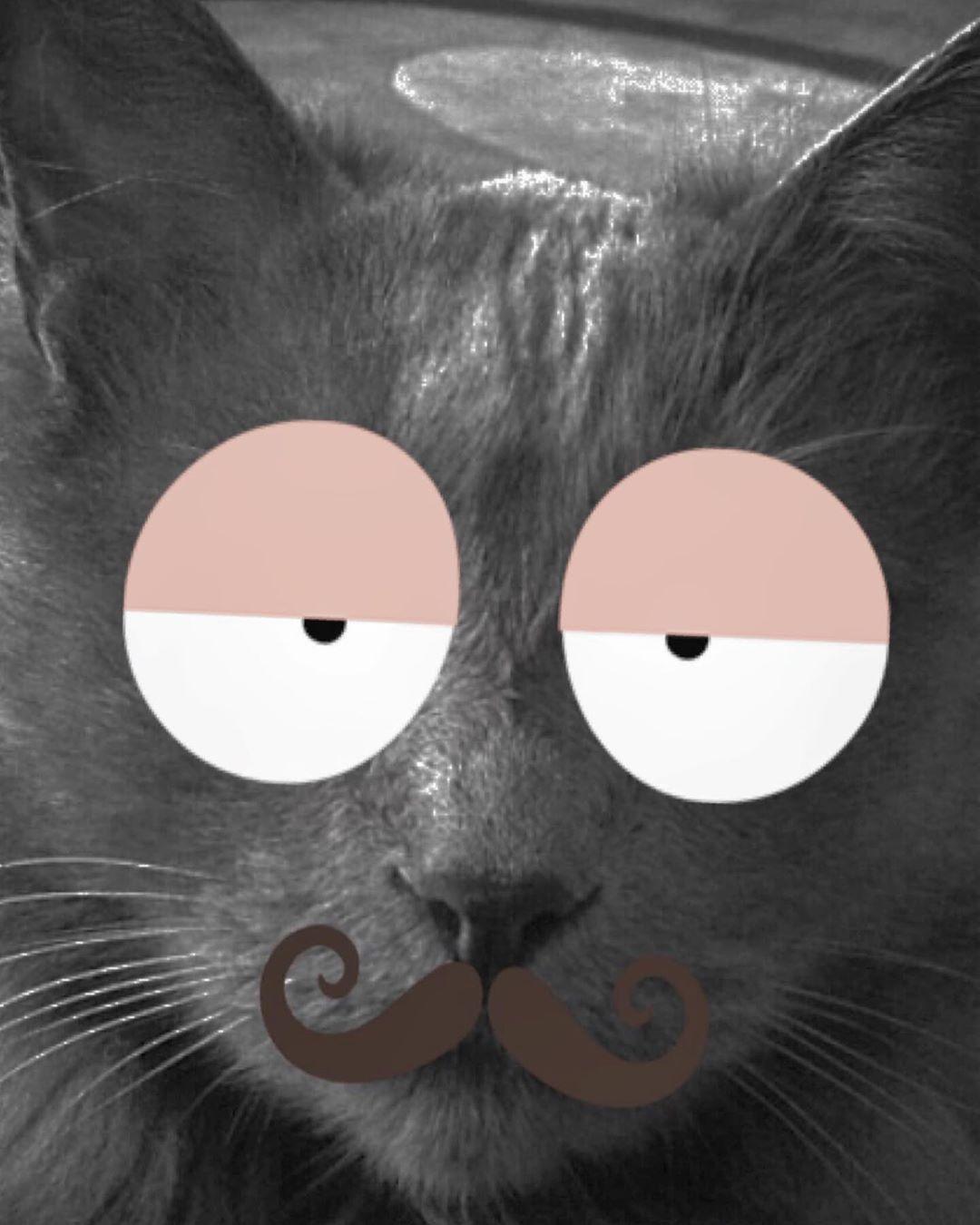 Cats Cat Catsofinstagram Catstagram Catlife Meow Funnycats Mycats Catganster Catstory Lovecat Catfood Instacat Sl Cat Day Cute Animals Cat Life