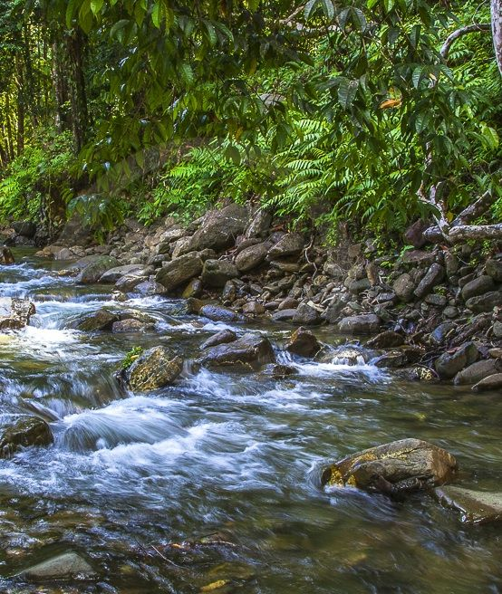 River In Trinidad Gregory Scott Photography Landscape Photography Trinidad And Tobago Photographer Trinidad Caribbean Trinidad Landscape Photography