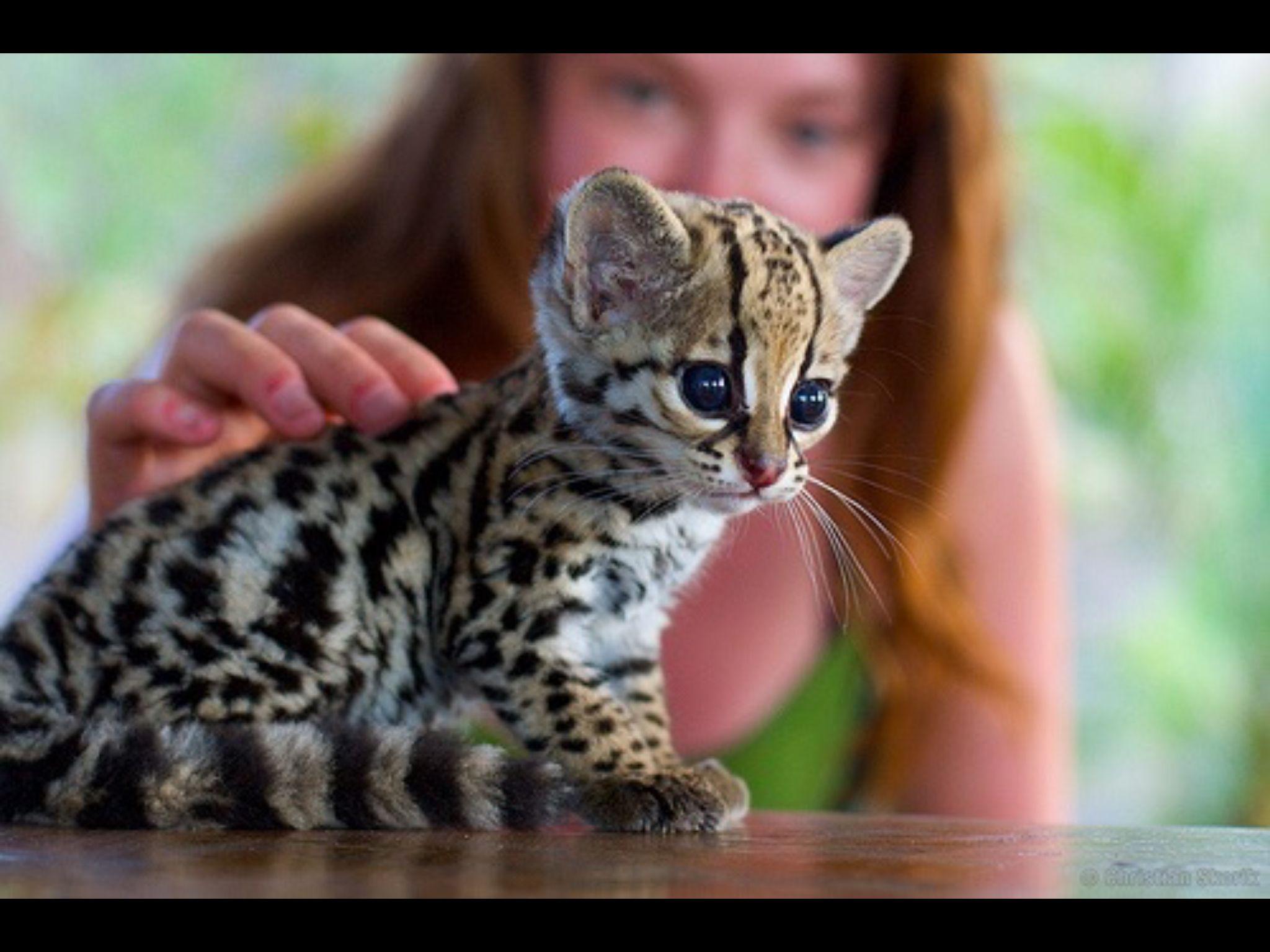 So Cute Cute Animals Cute Baby Animals Animals