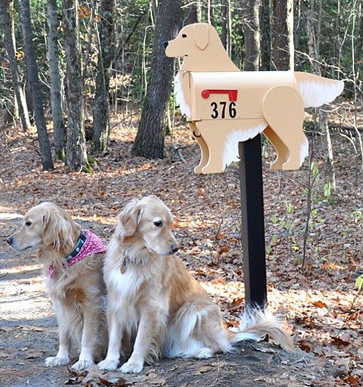 Golden Retriever Mailbox With Customers 3 Golden Retriever