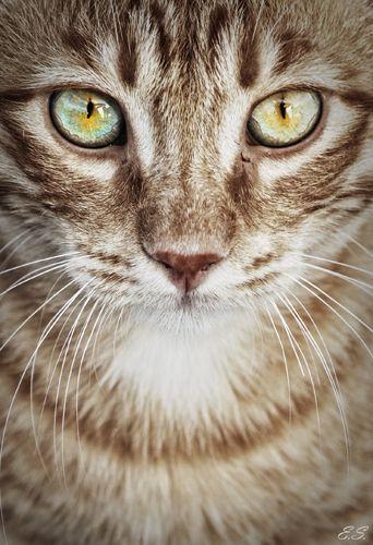 Cat health eyes