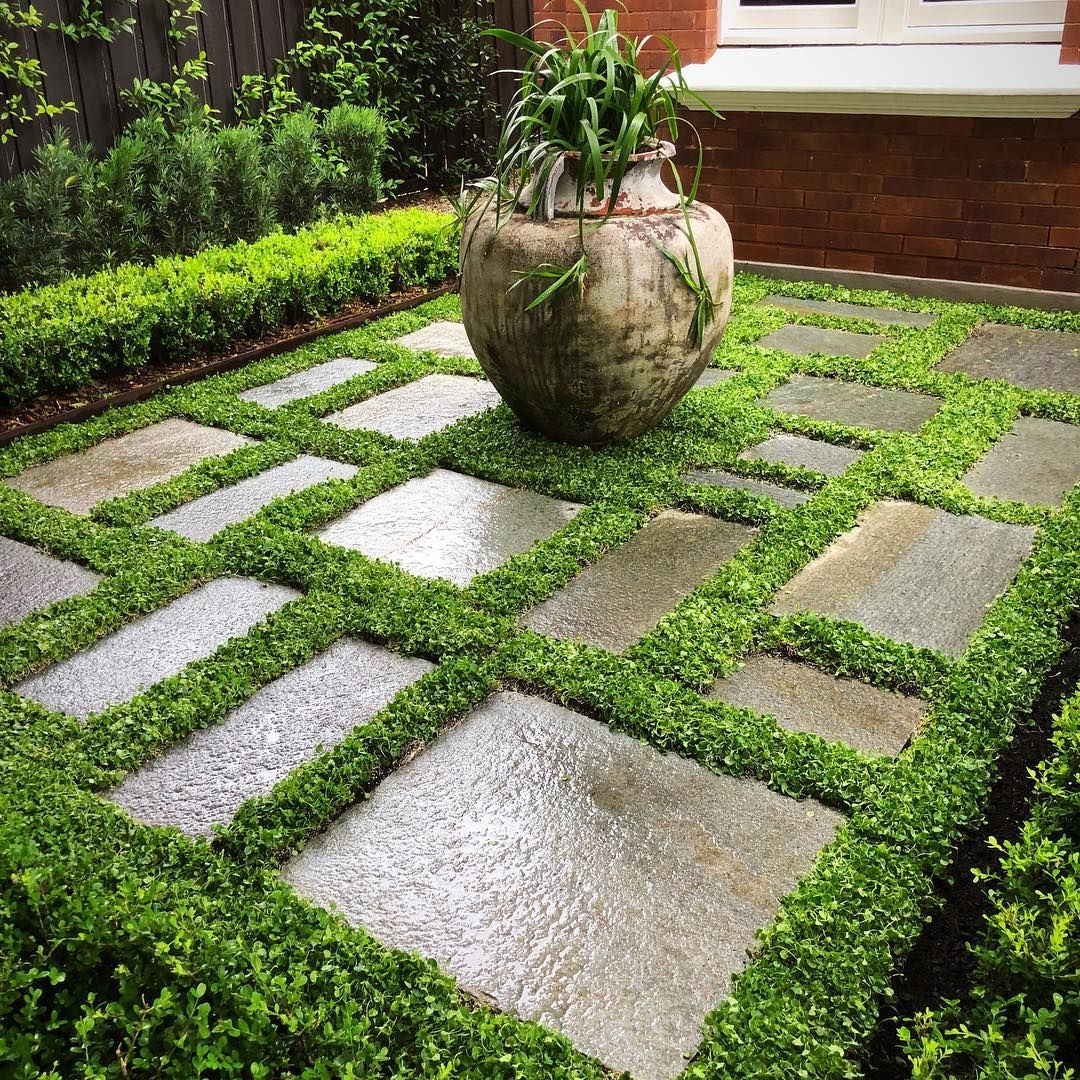 Fcg Landscaping On Instagram Green On Green On Green At Our Cammeray Project Random Luca Paving From In 2020 Small Urban Garden Beautiful Gardens Garden Show