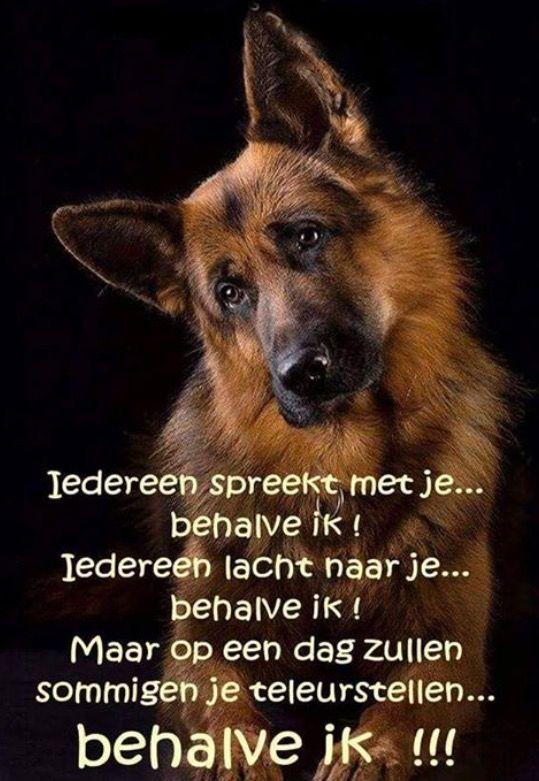 mooie honden spreuken Honden  mooie honden spreuken