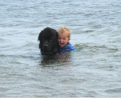 Is it a duck…or a dog? The Newfoundland breed has a water