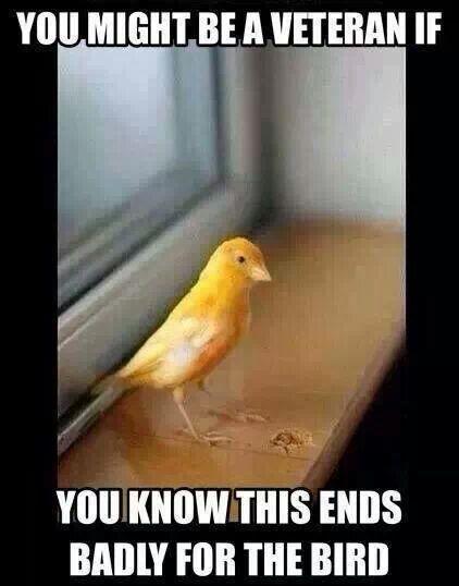 Little yellow bird cadence usmc
