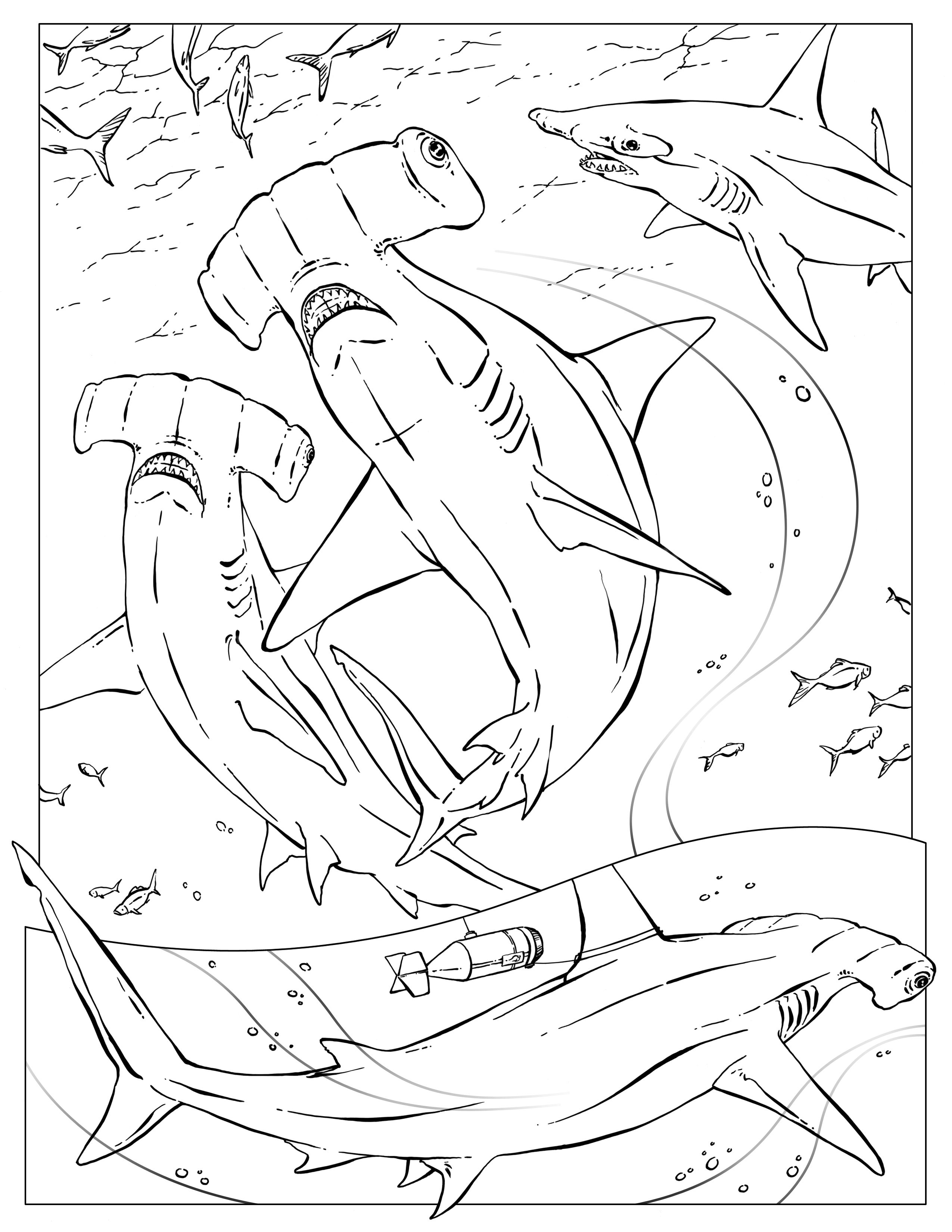shark coloring | Marine life coloring pages | Pinterest | Shark ...
