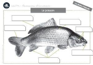 Articles A Propos De Decouverte Du Monde Le Vivant Sur Cycle Fish Pet Portrait