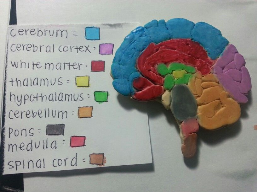 Brain project | Brain models, Brain craft, Art therapy ...