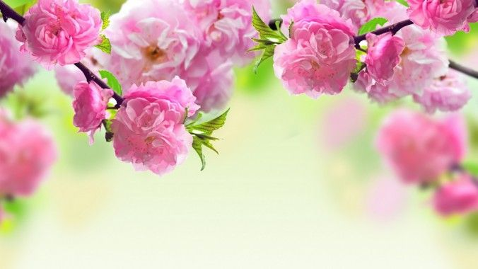 Beautiful Spring Season HD Wallpapers