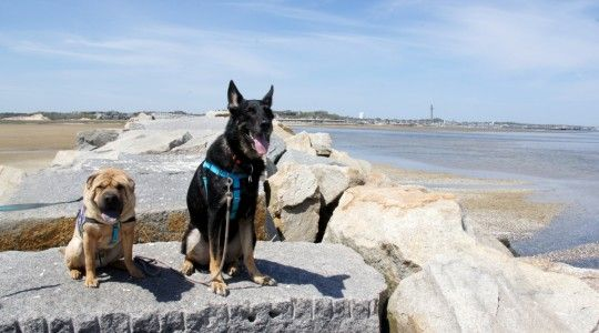 Provincetown Is Most Pet Friendly Dog People Pet Friendly Provincetown
