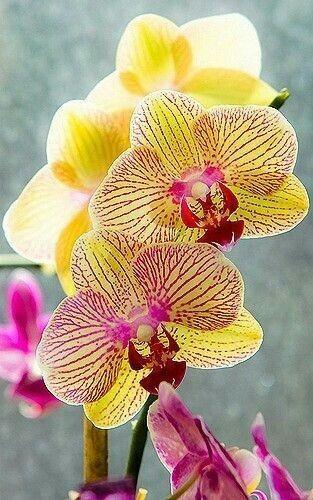 Deseja aprender a cultivar orquídeas? Clique neste