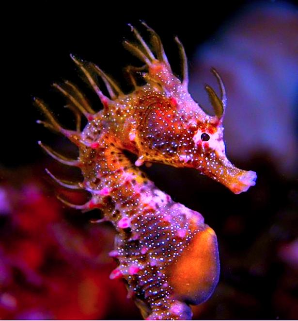Pin By Royce Gassman On Diary Of A Mermaid Beautiful Sea Creatures Sea Creatures Ocean Creatures