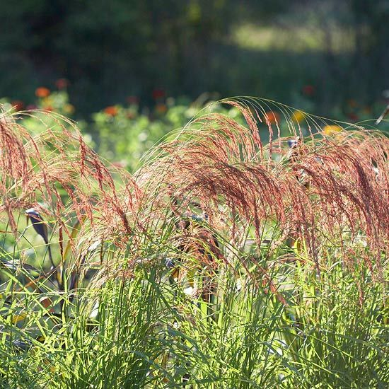Best Plants For Mississippi Landscapes