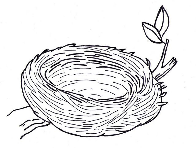 bird in nest coloring pages - photo#2