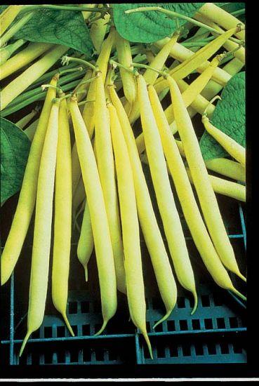 Kentucky Wonder Wax Pole Bean Stokes Seeds Pole Beans Seeds Vegetable Seed