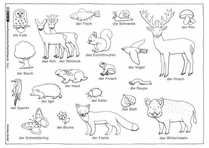 Natur Wald Tiere Pflanzen Henkel Tiere Waldtiere Und Wald