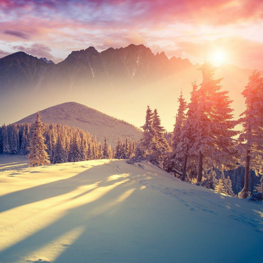 Winter Sunset Forest Shadows Ipad Wallpaper Iphone Wallpaper Winter Winter Wallpaper Desktop Winter Wallpaper Hd