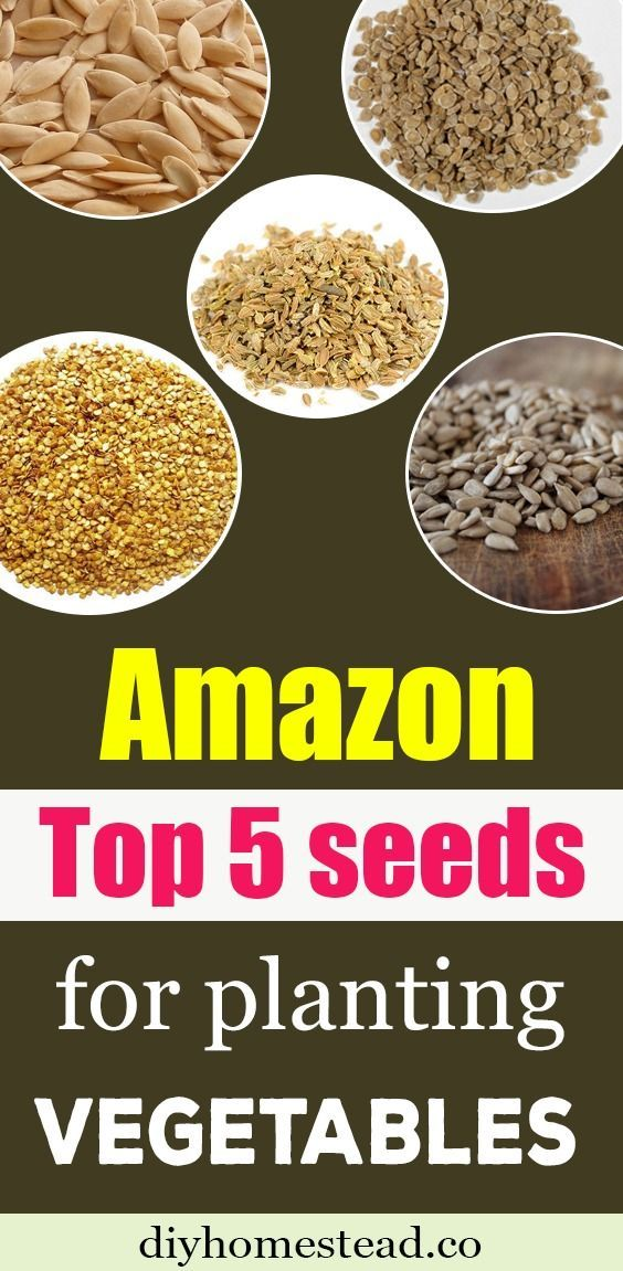 Top 5 seeds for planting vegetables you will need to enjoy freshly harvested veg #anbauvongemüse