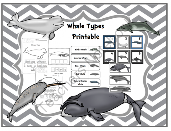 whale types printable from preschool printables on teachersnotebookcom 37 pages
