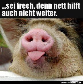 Schweine Sprüche