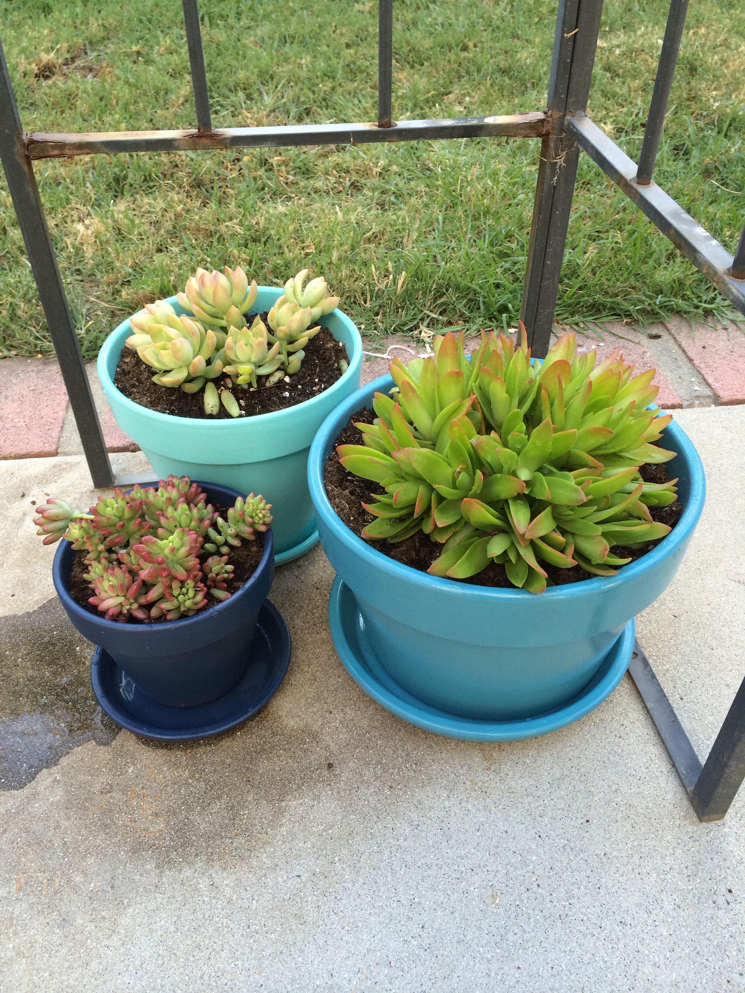 Spray paint flower pots