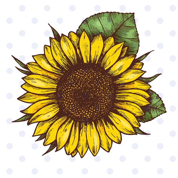 Sunflower Sunflower Svg Sunflower Clipart Sun Svg Flower Svg