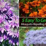 13 Plants That Repel Mosquitoes #mosquitoplants