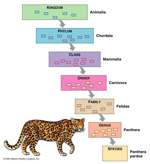 elementary animal classification chart – Taxonomy Worksheet