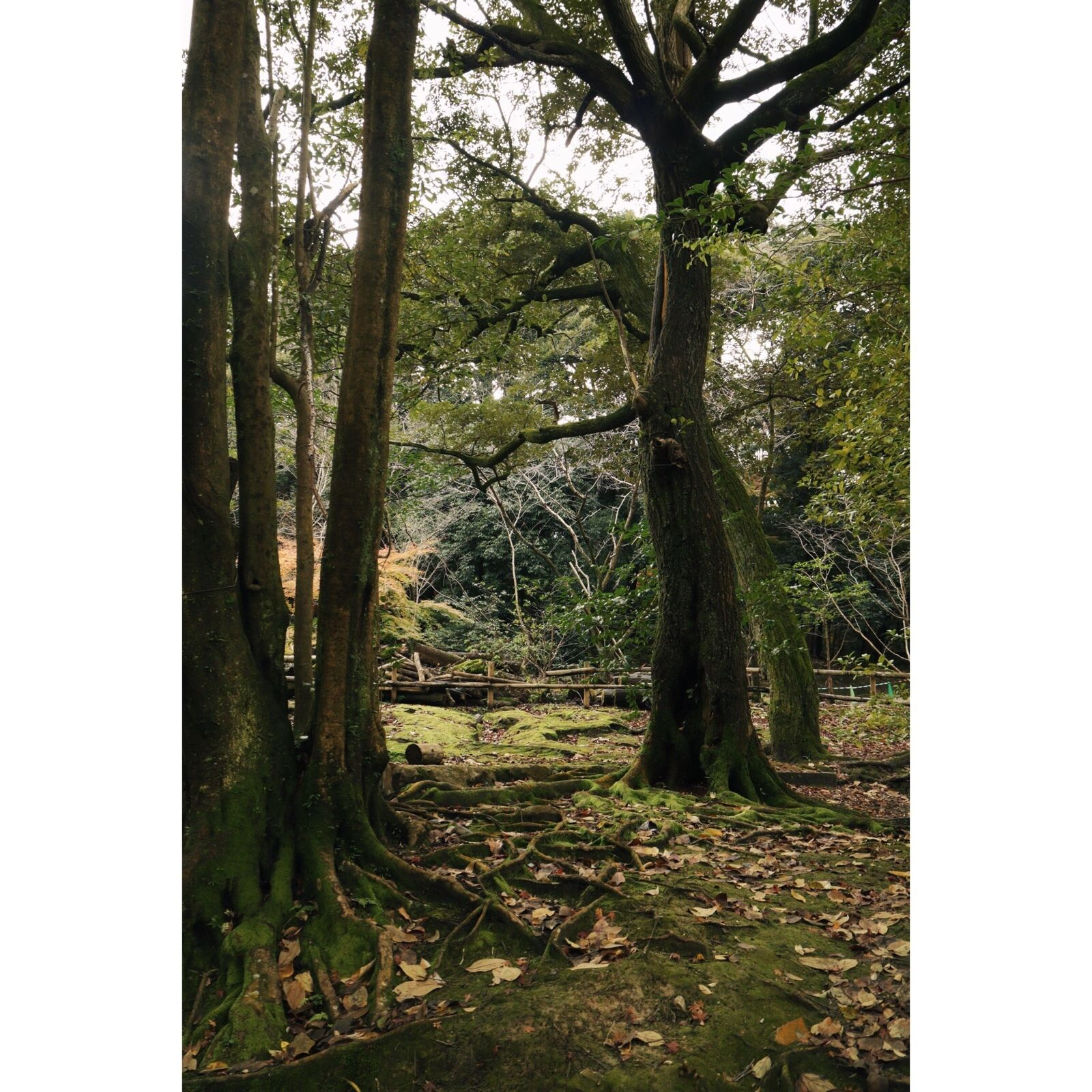 Reposting @harpski: Secret Garden. . . . #trees #tree #garden