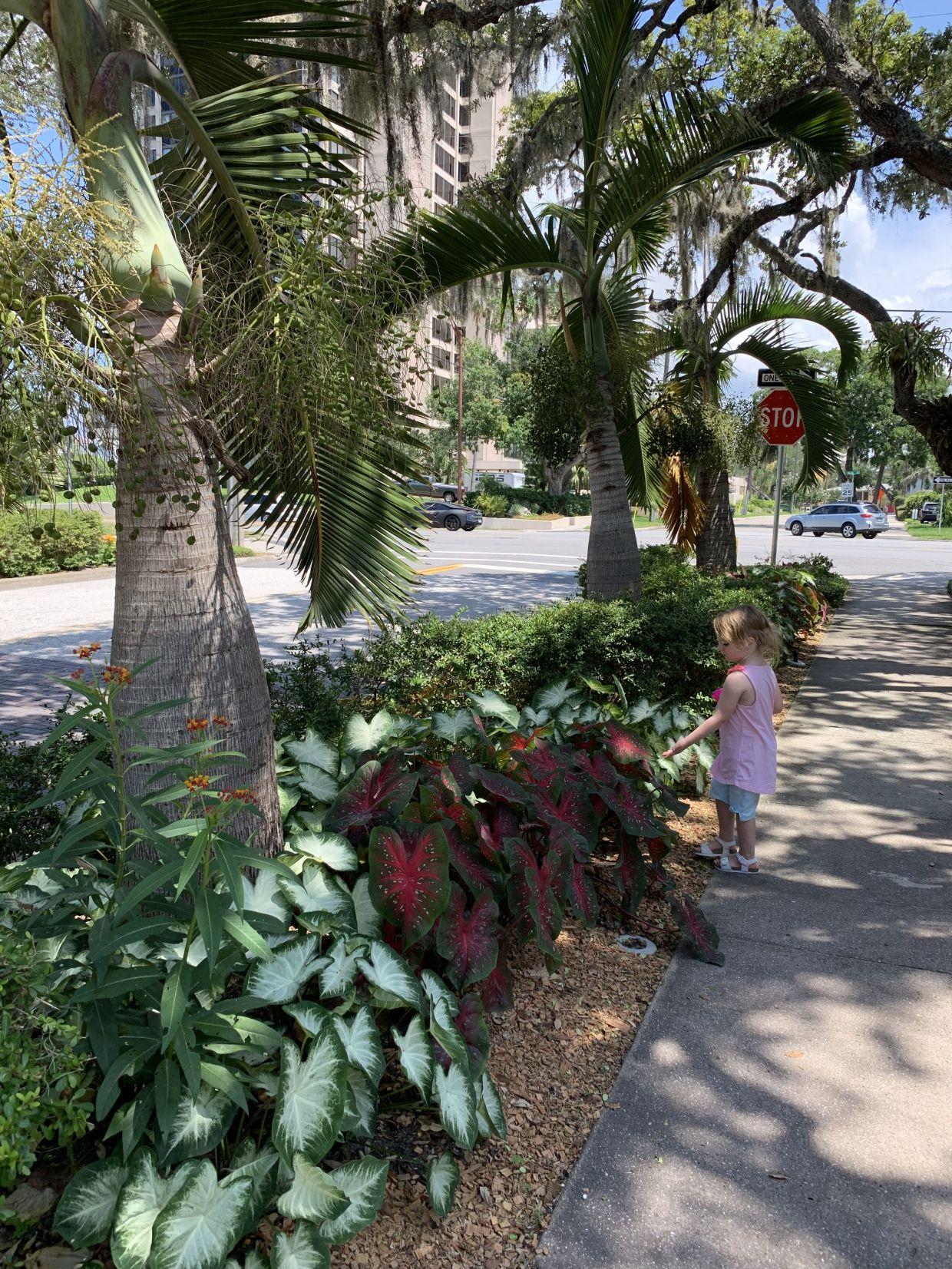 Marie Selby Botanical Gardens Sarasota Florida Botanical Gardens Garden Botanical