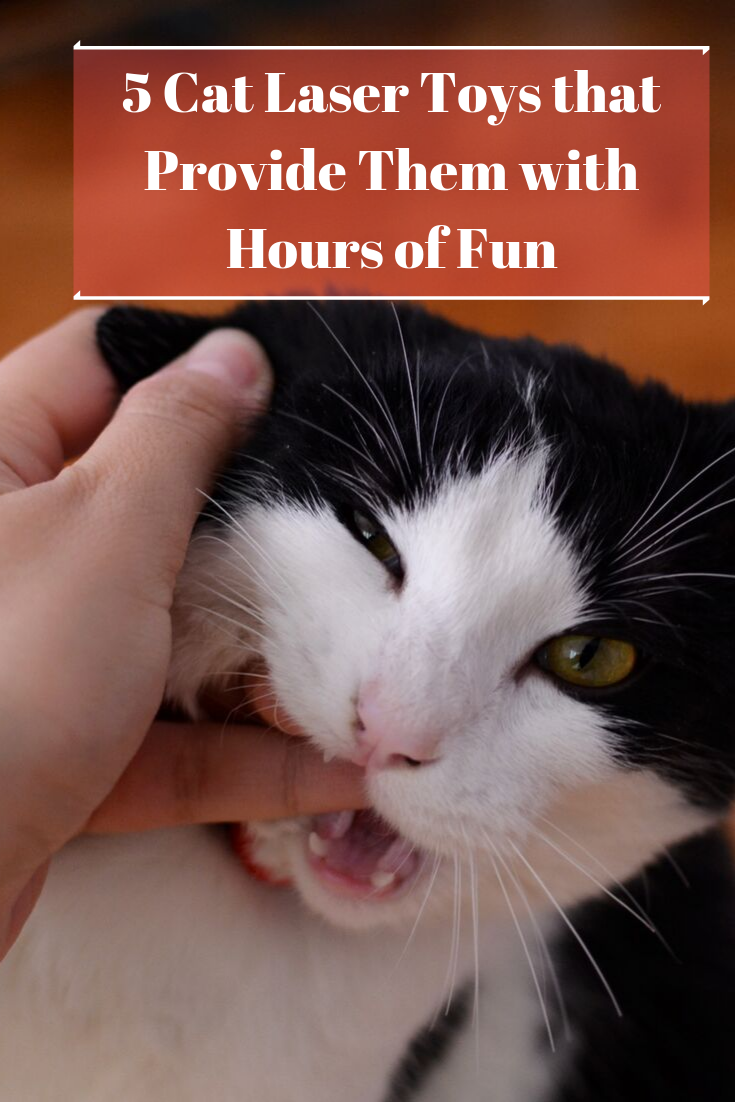 5 Cat Laser Toys That Provide Them With Hours Of Fun Cat Quotes Cat Laser Toy Cat Laser