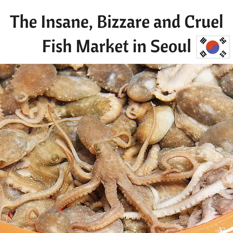 A Crazy Korean Experience at the Fish Market in Seoul