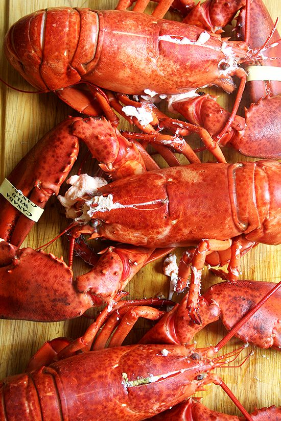 """""""It's not a pleasant experience, but when you eat lobster and when you eat any kind of animal, that animal has been alive and it's very important to be aware that we are taking that life away and that we are going to eat it, and if we do a good job, we are actually paying homage to the lives that we sacrifice.""""  Eric Ripert."""
