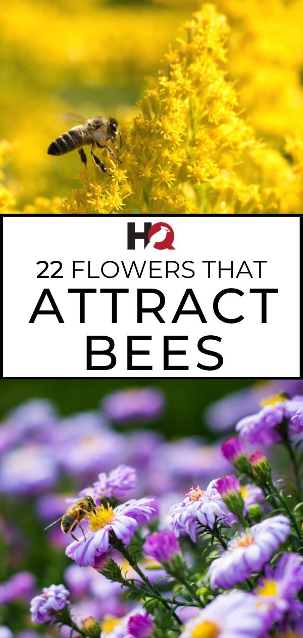 22 PROVEN Flowers That Attract BEES! [2019 Guide -   13 plants Flowers articles ideas