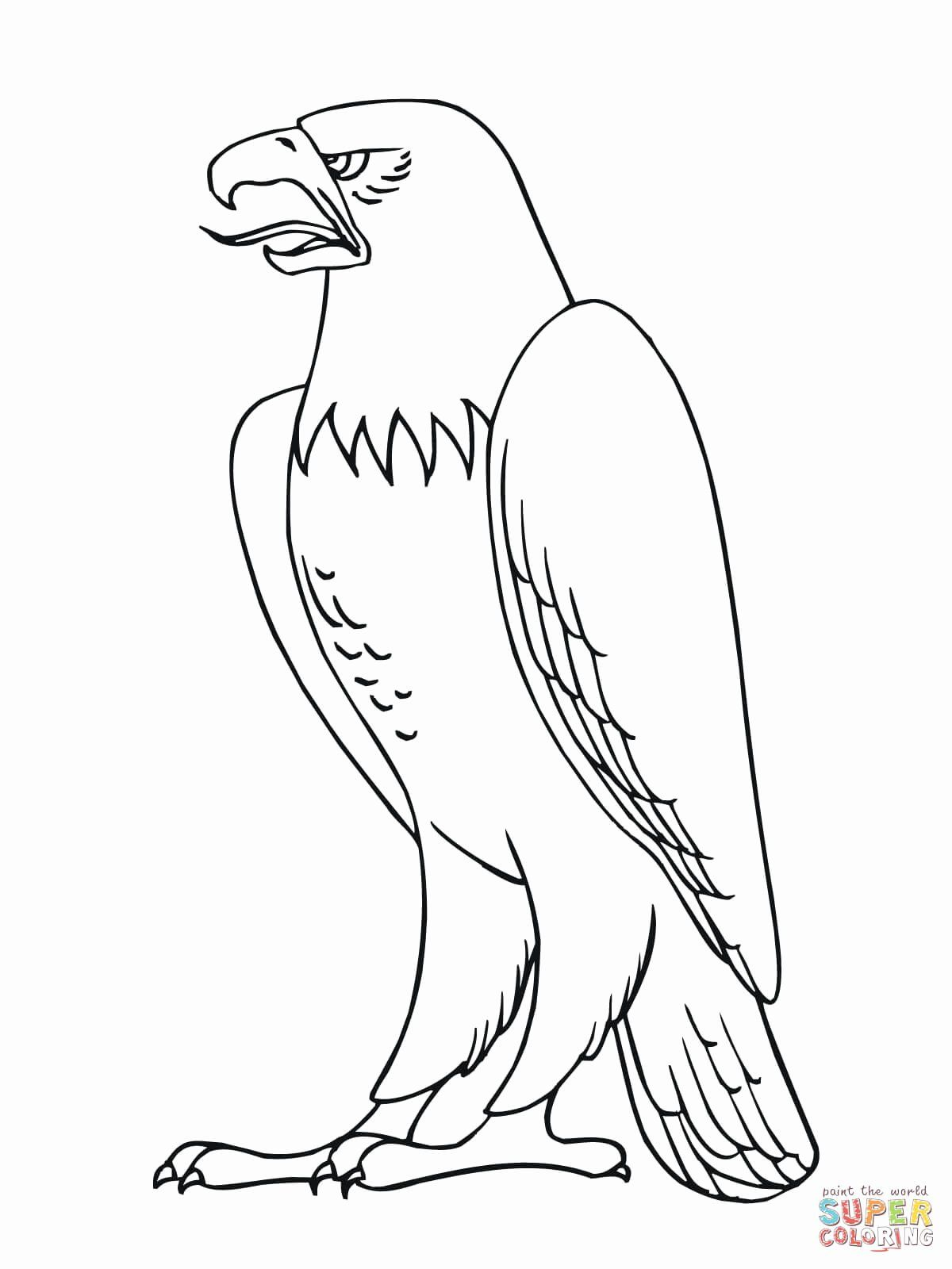28 Bald Eagle Coloring Page In