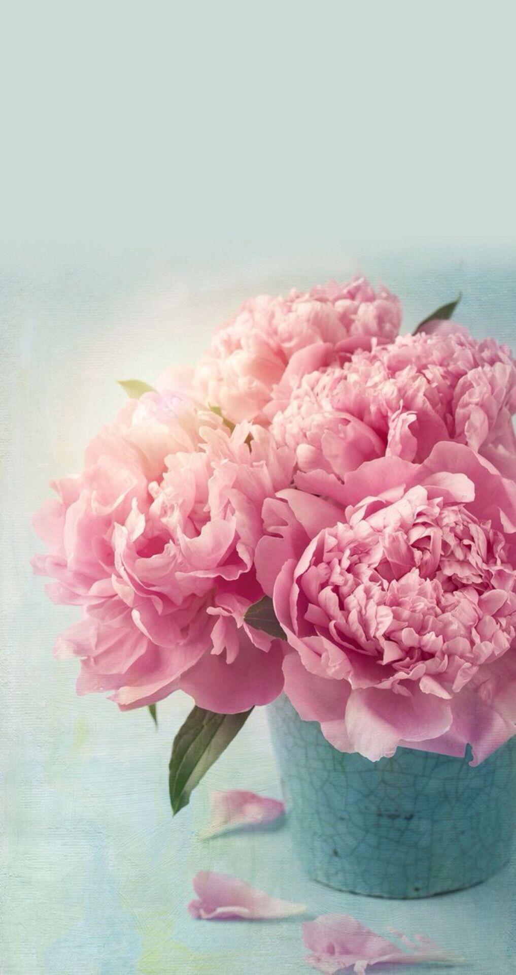 Hello Spring Peony Wallpaper Nature Iphone Wallpaper Pink Peonies