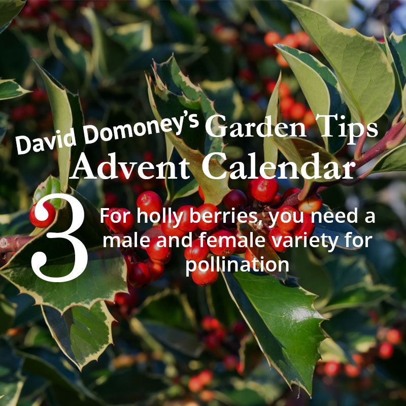 David Domoney's Garden Tips Advent Calendar December 3rd