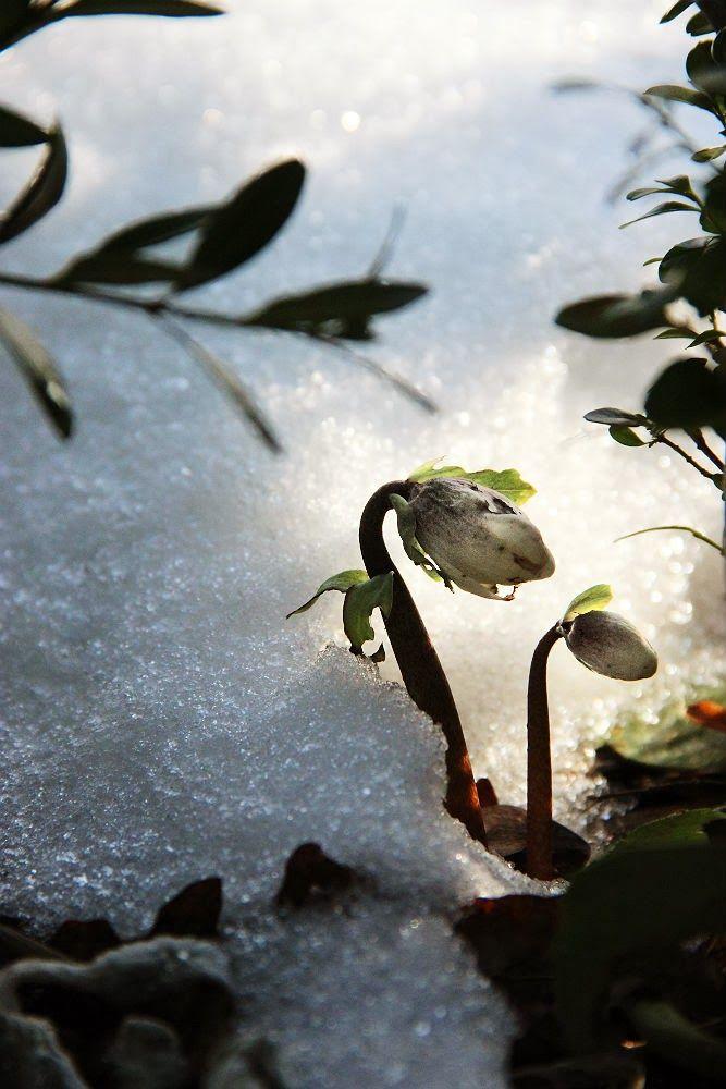 julros i snö