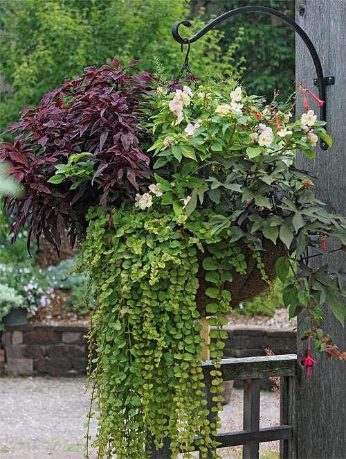 Como Combinar Plantas En Macetas Plantas En Maceta Jardineria En Macetas Macetas