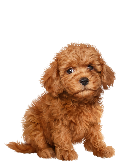 Chien Chiot Dog Fluffy Dogs Puppies And Kitties Poodle Puppy