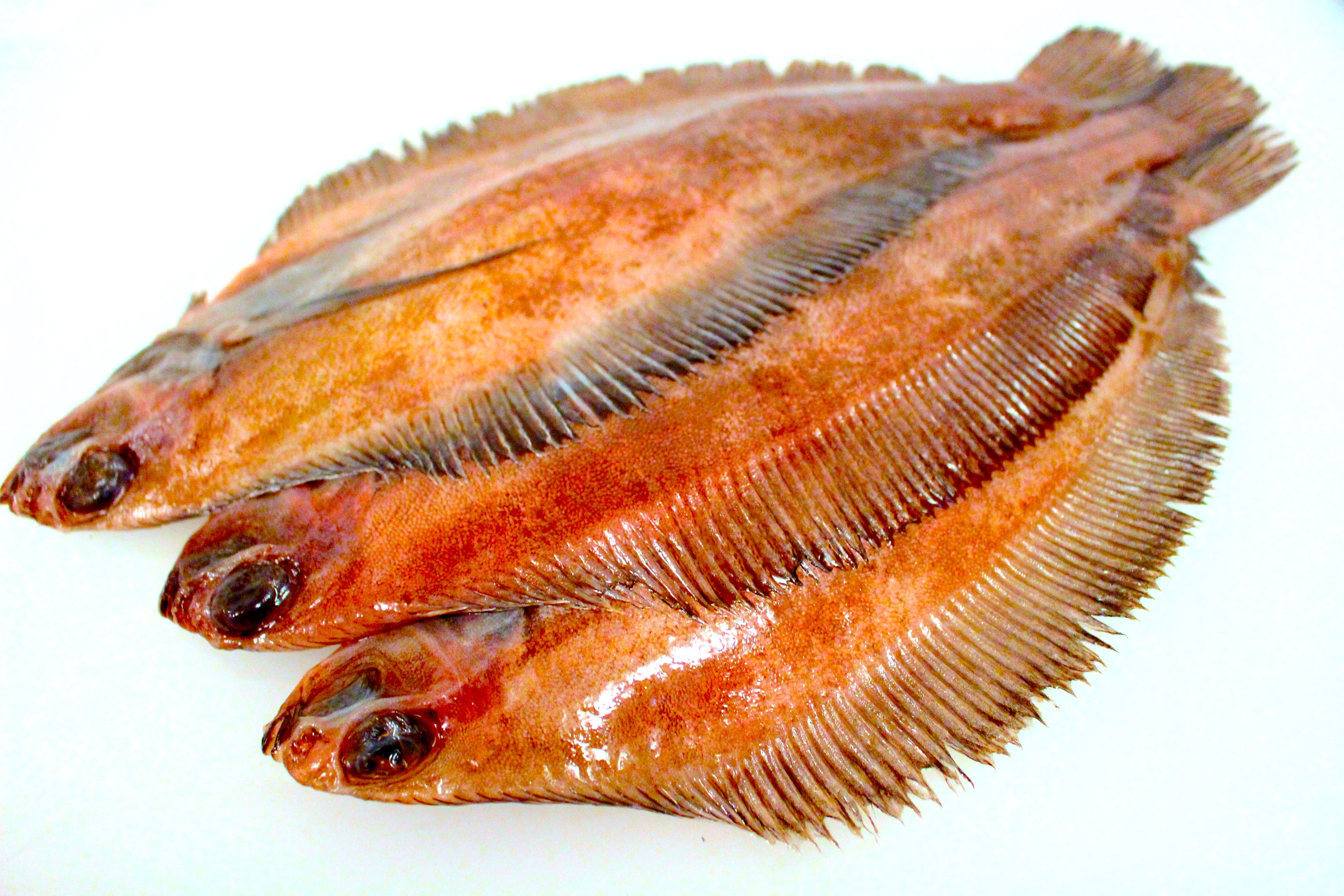 Rex Sole Whole Round 15 Lbs 22 50 Http Www Globalseafoods Com Rex Sole Whole Round Seafood Sale Frozen Seafood Seafood Online